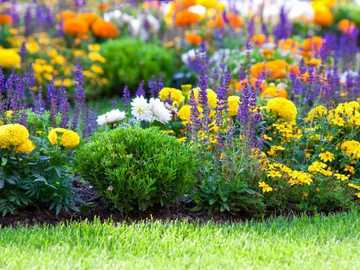 Colorful flowers in the garden - Colorful flowers in the garden