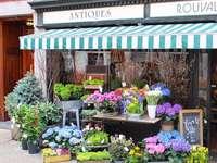 Магазин за цветя в Бостън - Магазин за цветя в Бостън