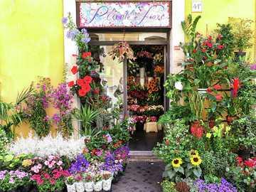 Flower shop in Rome - Nice flower shop in Rome