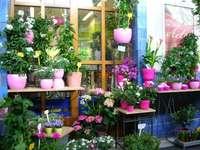 Магазин за цветя в Тюбинген - Магазин за цветя в Тюбинген