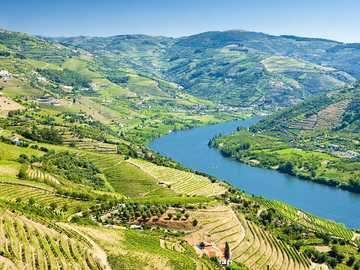 vineyards in portugal - m ...................