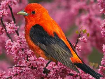 red and black bird - m ...................