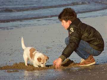 che gioca con un cane sulla spiaggia - m ...................