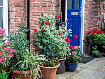 House entrance with flowers and plants - House entrance with flowers and plants