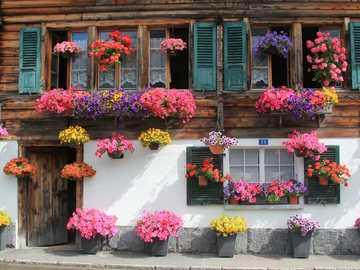 Abundancia colorida de flores en la casa - Abundancia colorida de flores en la casa