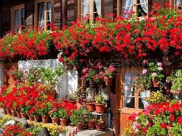Colorful abundance of flowers on the house - Colorful abundance of flowers on the house