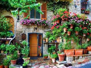 A garden in plant pots - A garden in plant pots