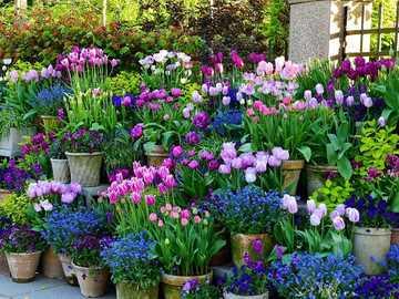 Abundance of flowers in plant pots - Abundance of flowers in plant pots
