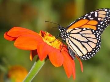 Butterfly - Butterfly posing on a flower