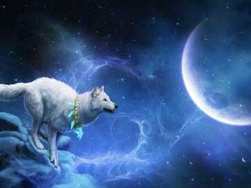Loup de la nuit - photo montrant un loup attiré par la lune