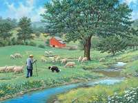 Schafe weiden lassen