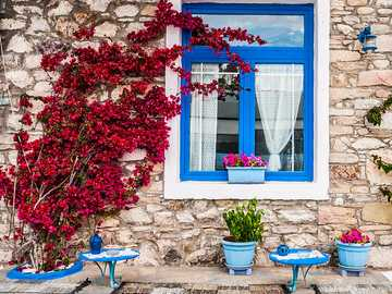 red bush in greece - m ........................