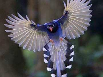 pássaro colorido - m ......................