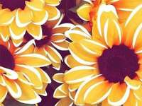 Sunflower? - You will love it, as much as you love sunflowers.
