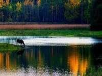 Bela Polônia. - Os lugares mais bonitos da Polônia.
