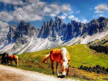 Wild horses in the Dolomites - Wild horses in the Dolomites