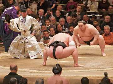 sumo fight - sumo fight in Japan