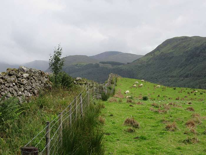 Scottish pasture - Scottish pasture in Glen Nevis
