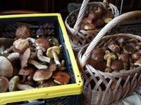 Champignons forestiers