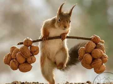 Lagerbestände für den Winter - Eichhörnchen - Winterbedarf