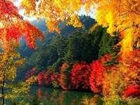 τα χρυσά χρώματα του φθινοπώρου - τα χρυσά χρώματα του φθινοπώρου