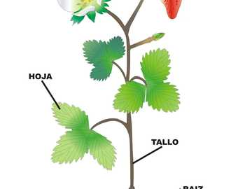 THE PARTS OF THE PLANT - students will complete the puzzle in pairs