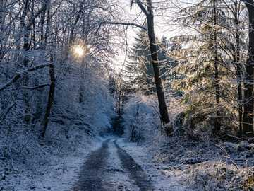 Pasarela cubierta de nieve junto a árboles sin hojas - ¿Te gustan estas fotos?  Apoyame en https://ko-fi.com/jnaberle. Camino sin nombre, 51789 Lindlar, A