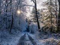 заснежена пътека до безлистни дървета - Харесвате ли тези снимки?  Подкрепете ме на https://ko-fi.com/jna