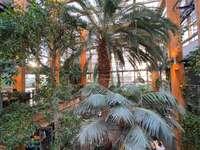 Palm House - Palm House din Varșovia