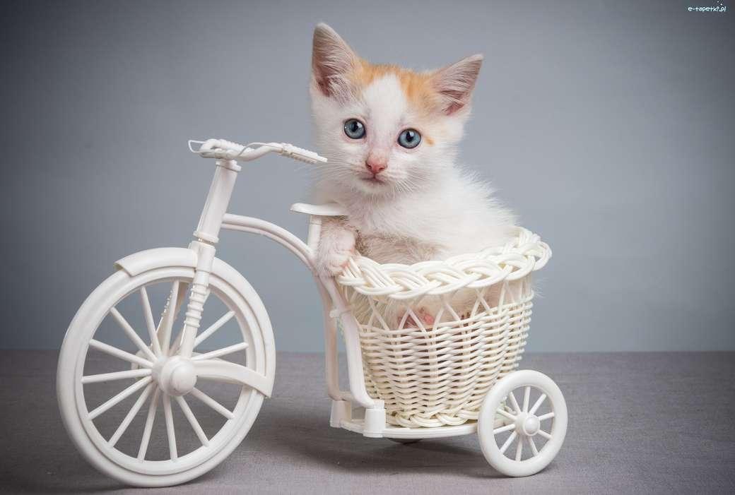Kitten in een fiets