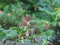 hamster no jardim