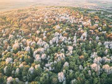 La primavera è qui. - albero dalle foglie verdi. Eplény, Ungheria