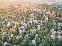 Primavera é aqui. - árvore de folhas verdes. Eplény, Hungria