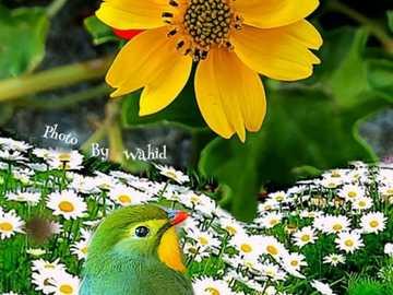 Flor amarela - Flor amarela com passarinho
