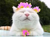 άσπρη γάτα - Λευκή γάτα με στεφάνι λουλουδιών