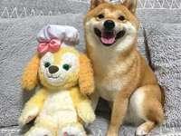 Γεμισμένος σκύλος - Ο σκύλος παίζει με το γεμισμένο ζώο του