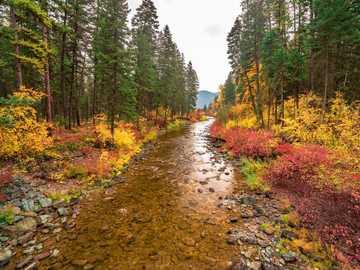 autumn stream - autumn mountain stream