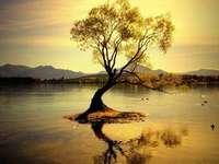 Träd i vattnet - Trädet växer på vattnet