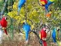 Kleurrijke parkieten