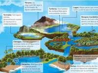 Écosystèmes intermédiaires