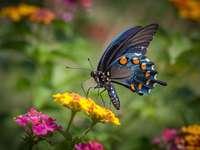 Fluture....