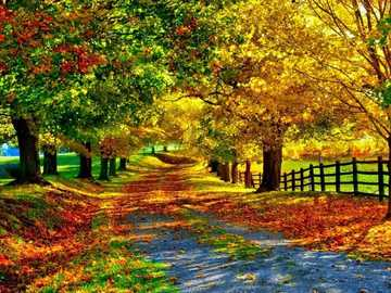 the road passes through the forest - trees leaves long road fence from the clouds