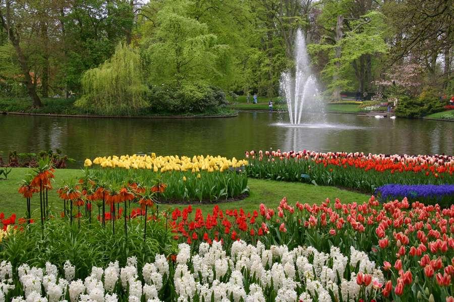 Keukenhof - belos jardins em Keukenhof (9×6)