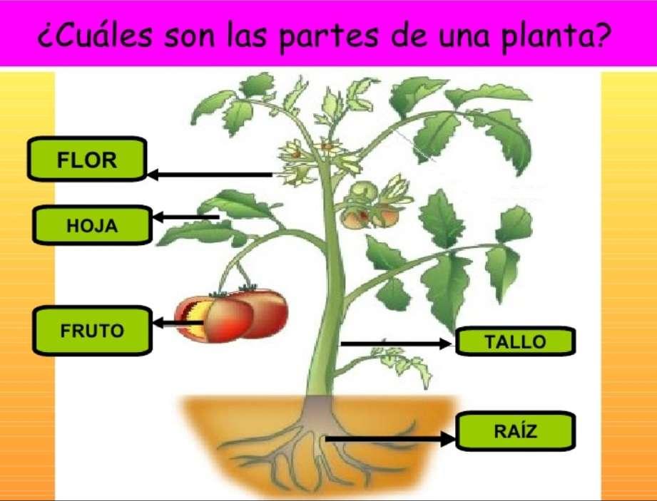 Părți ale plantei - Părți ale plantei cu fructe (3×3)