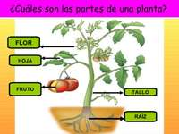 Части от растението