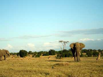 Elefanten in freier Wildbahn - zwei graue Elefanten unter klarem blauem Himmel während des Tages.