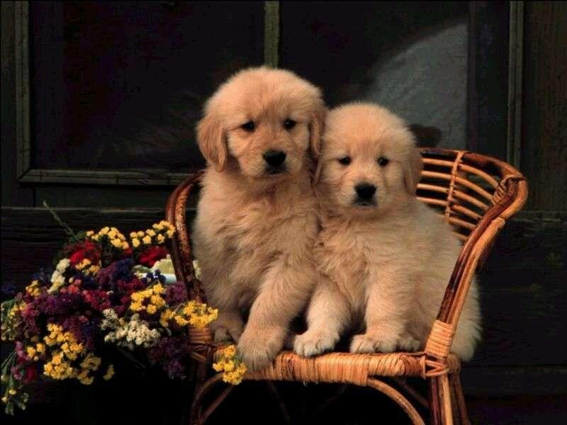 Две малки сладки кучета
