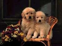 Deux petits chiens mignons