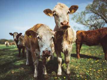 """bovini bianchi e marroni sul prato verde durante il giorno - Sono andato in una zona chiamata """"Spreewald"""" qui in Germania. Insieme a due buoni amici ho"""