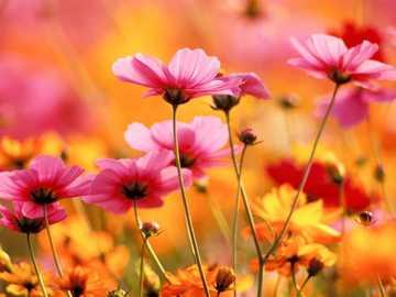 flores muito fáceis - lindas flores para a vovó
